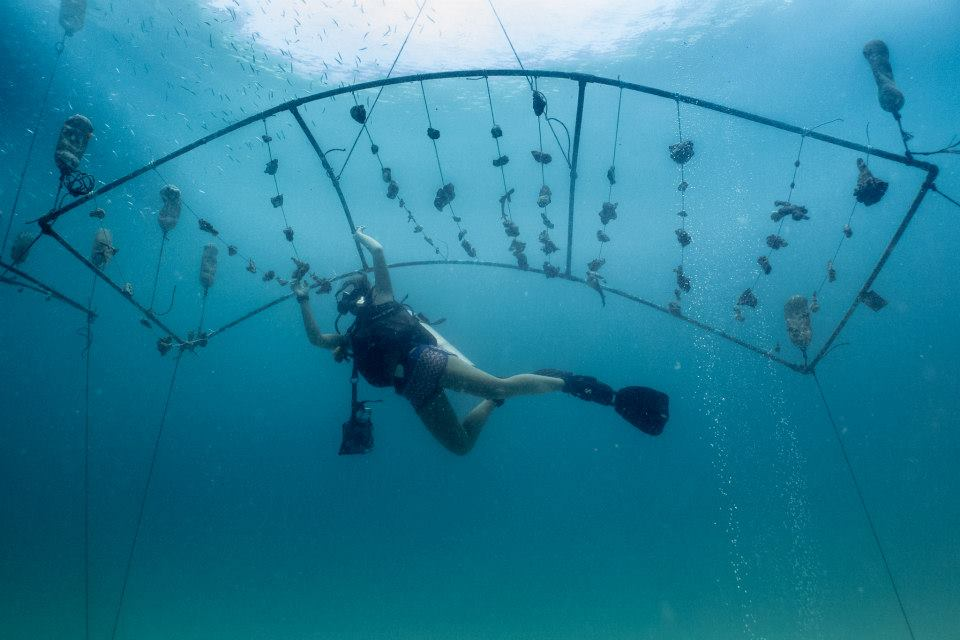 A scuba diver building and maintaining an artificial reef in Thailand