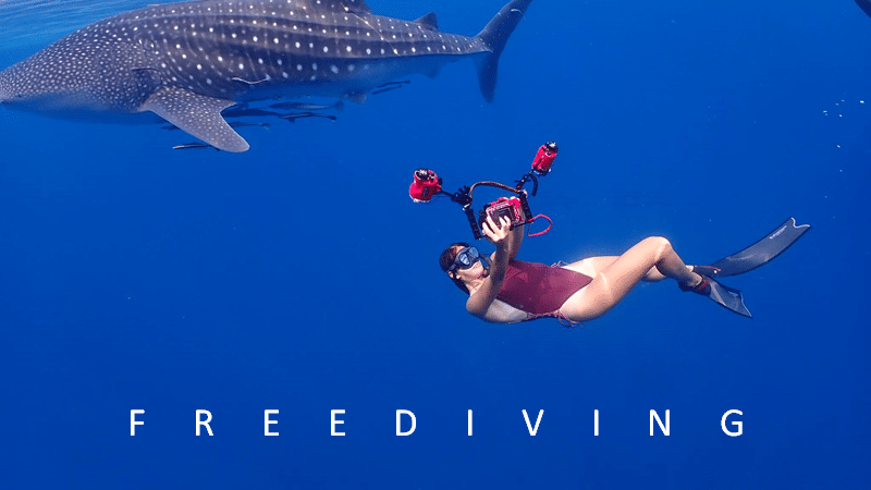 Ploy Scott, PADI Freediving Instructor Trainer and owner of Bangkok Freedivers photographing and calmly swimming with a Whale Shark